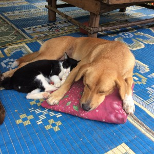 Cats & dogs can live in perfect harmony