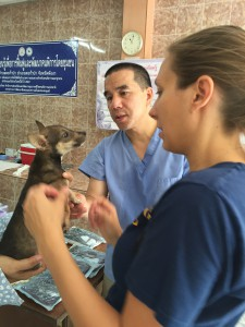 All the animals were given a complete health check as well as vaccines